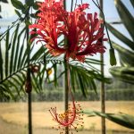 Coloniality and Botany